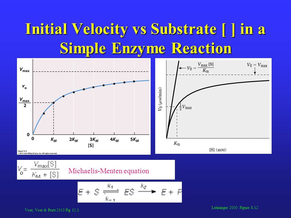 Initial Velocity vs Substrate [ ] in a Simple Enzyme Reaction